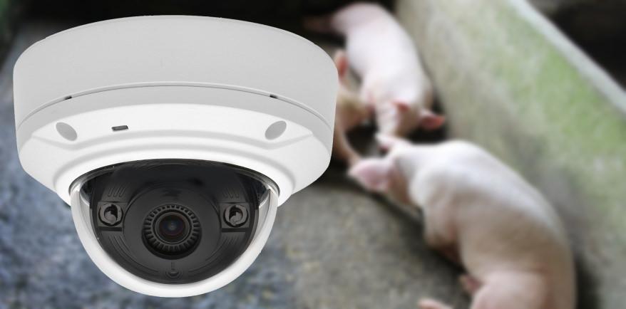 caméra pour surveillance vaches et chevaux