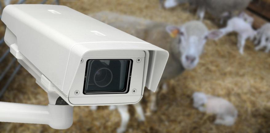 caméra surveillance étable et écuries