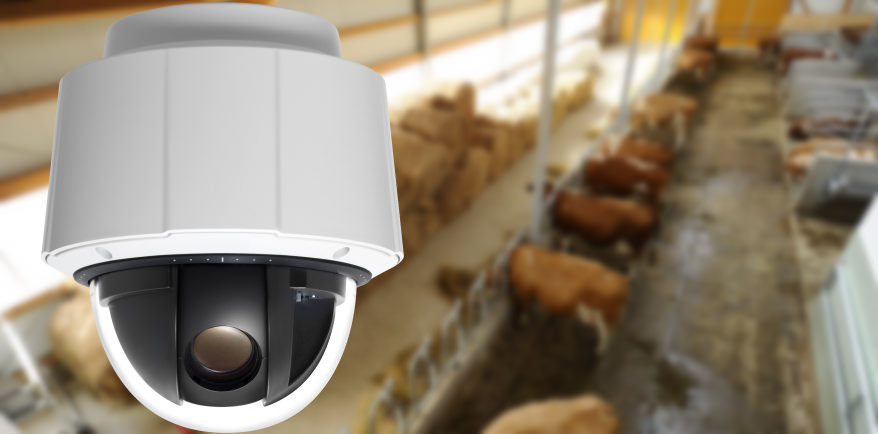 caméra surveillance chevaux